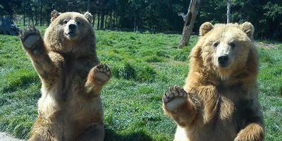 Waving-Bears-for-header11-e14650917501651