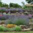 Sequim Lavender Park